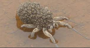 Damn Nature You Scary Meme - a grey wolf spider with its babies wolf spider scary and gray wolf