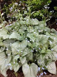 7 plants for your perennial shade garden hobby farms