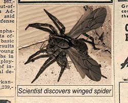 shukernature spiders with wings implausible things