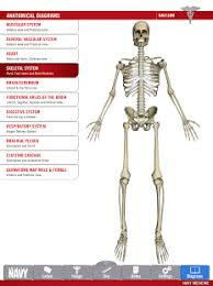 Google Body Anatomy Anatomy Study Guide Android Apps On Google Play