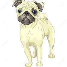 color sketch of the dog fawn pug breed royalty free cliparts