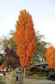 51 best trees images on garden plants and