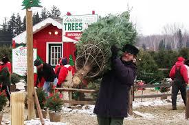 Natural Christmas Tree For Sale - michigan christmas tree association