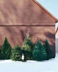 how to pick out a christmas tree martha stewart
