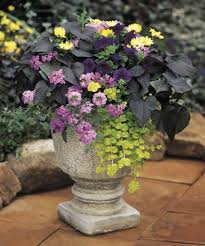 Foliage Flower - container garden design foliage and texture proven winners