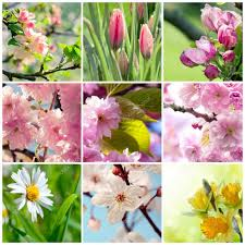beautiful spring flowers collage nine photos u2014 stock photo