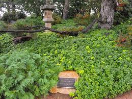 seasonal gardening u2013 california native botanical garden u s japanese gardens
