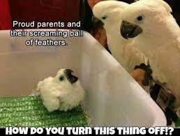 Parrot Meme - 15 lol parrot memes for you to enjoy cutesypooh