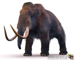 woolly mammoth verge resurrection scientists reveal