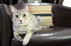 How To Fix Scratches On Leather Sofa How To Fix Cat Scratches On Leather Furniture Pawculture