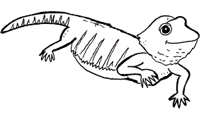 28 bearded dragon coloring pages free bearded dragons coloring