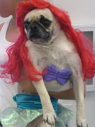 Halloween Costume Pugmaid Buzzfeed Costumes Animal
