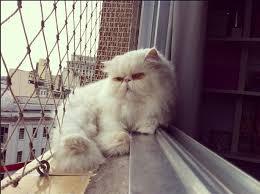 Super Gato no calor: cuidados redobrados! | Oca dos Bichos #QV21