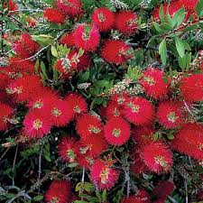 Flowering Shrubs That Like Full Sun - xeriscape texas native plants for drought tolerant resistant design