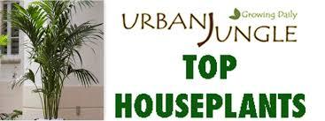top house plants top houseplants the palm