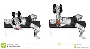 exercising dumbbell bench press while lying on an stock