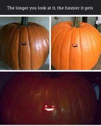 Meme Pumpkin Carving - forget spooky faces this guy carved a cat s butt into his pumpkin