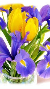 18 best for mom images on pinterest blue bouquet yellow tulips