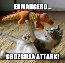 Ermahgerd Animal Memes - cat memes meme city