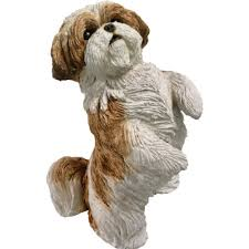 sandicast gold and white shih tzu holding