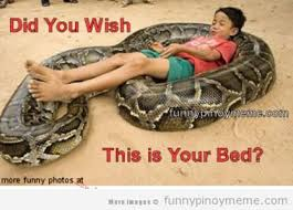 You Wish Meme - did you wish this is your bed funny snake meme picture