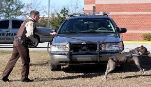 belgian shepherd vs pitbull fight police dog training pitbull police dogs