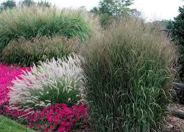 garden design garden design with ornamental grass gardens purple