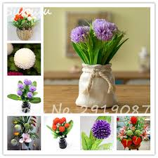 clove trees promotion shop for promotional clove trees on