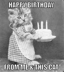 Happy Birthday Cat Memes - top birthday cat memes images and gif 9 happy birthday