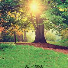 background photography trees forest photography backdrop naturism children photos