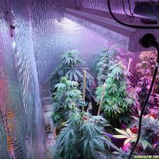 cottage 420 u0027s organic perpetual indoor garden page 28