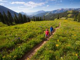 six amazing wildflower hikes in colorado