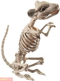 halloween animal skeleton prop party decoration rat spider cat dog