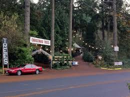 faith family farm i want to work at a christmas tree lot