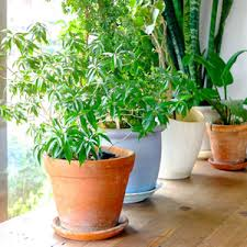 plants at home how to revive a dying houseplant garden club