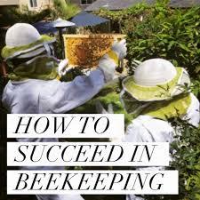Backyard Beehive Beekeeping Like A How To Succeed In Beekeeping