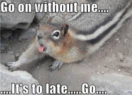 Dramatic Squirrel Meme - go without me animals 1funny com