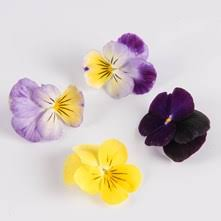 Where To Buy Edible Flowers - edible flowers flavor components and beauty on the plate the