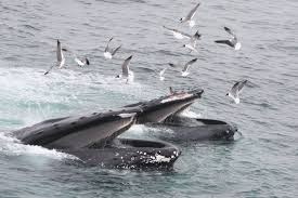 science new bedford whaling museum blog