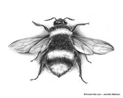 bee scientific drawing amazing wallpapers gift ideas