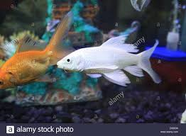 Freshwater Fish Freshwater Fish Aquarium Fish Tropical Fish Pictures Of Fish