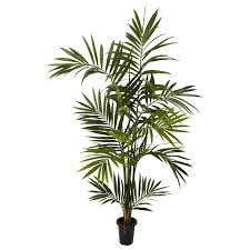 nearly kentia palm tree in pot reviews wayfair