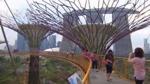 solar trees flourish in singapore sbs news