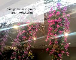 Chicago Botanic Garden Events Fetching Chicago Botanic Garden Orchid Show Best Special Events