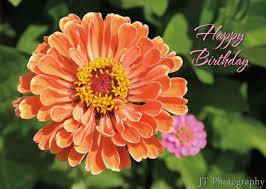 birthday cards greeting cards janine rosenberger smith