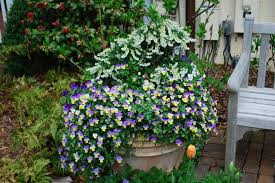 plant combinations for containers hgtv