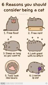Pusheen The Cat Meme - the last one is kinda mean but other than that yes pasheen