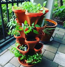 beautiful indoor herb gardens container herb gardens