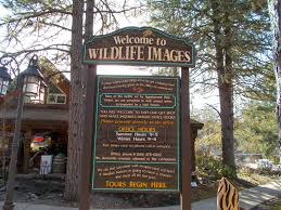 Oregon wildlife tours images What to do in southern oregon wildlife images and other fun JPG