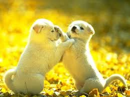 cute dog wallpapers cute playing puppies dog wallpapers backgrounds dogs wallpapers